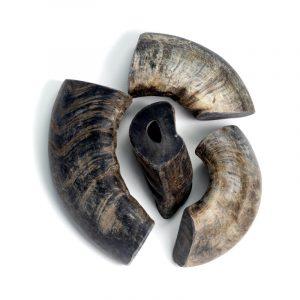 BULK Buffalo Horn Small