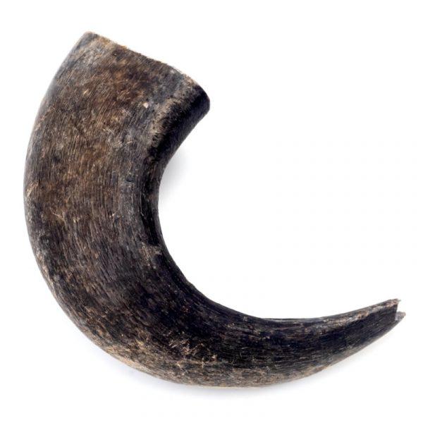 buffalo horn large